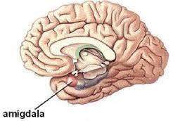 Efectos de la meditación mindfulness sobre el cerebro. (2/6)