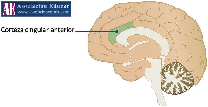 Efectos de la meditación mindfulness sobre el cerebro. (4/6)