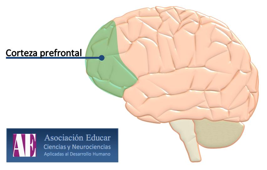 Efectos de la meditación mindfulness sobre el cerebro. (3/6)